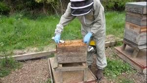 آموزش مرحله به مرحله زنبورداری ۰۲۱۲۸۴۲۳۱۱۸-۰۹۱۳۰۹۱۹۴۴۸-wWw.۱۱۸File.Com
