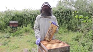 آموزش ۰تا ۱۰۰ پرورش زنبورعسل ۰۲۱۲۸۴۲۳۱۱۸-۰۹۱۳۰۹۱۹۴۴۸-wWw.۱۱۸File.Com