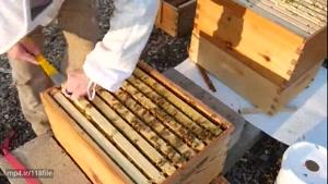 آموزش کامل زنبورداری در www.۱۱۸File.Com