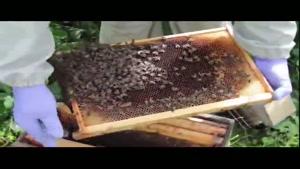 آموزش حرفه ای زنبور داری ۰۲۱۲۸۴۲۳۱۱۸ -۰۹۱۳۰۹۱۹۴۴۸-wWw.۱۱۸File.Com