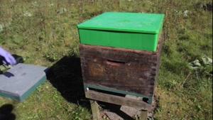 آموزش حرفه ای زنبور داری ۰۲۱۲۸۴۲۳۱۱۸-۰۹۱۳۰۹۱۹۴۴۸- wWw.۱۱۸File.Com