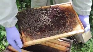 آموزش حرفه ای زنبور داری ۰۲۱۲۸۴۲۳۱۱۸-۰۹۱۳۰۹۱۹۴۴۸-wWw.۱۱۸File.Com
