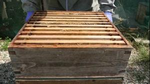 آموزش ۰تا۱۰۰ پرورش زنبورعسل - ۰۲۱۲۸۴۲۳۱۱۸-۰۹۱۳۰۹۱۹۴۴۸-wWw.۱۱۸File.Com