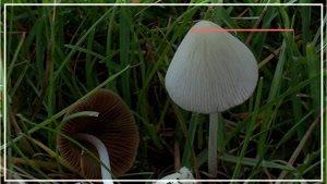 کاملترین آموزش آشنایی با تولید قارچ_۰ تا ۱۰۰