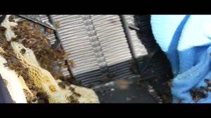 آموزش پرورش زنبور عسل