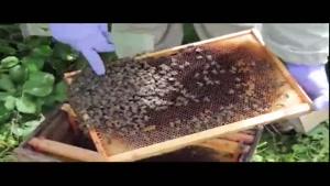 آموزش حرفه ای زنبور داری ۰۲۱۲۸۴۲۳۱۱۸- ۰۹۱۳۰۹۱۹۴۴۸ - wWw.۱۱۸File.Com