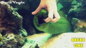 دنیای ماهی ها