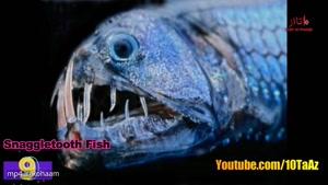 ۱۰ تا از مخوفترین موجودات دریایی