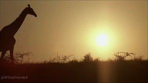 فیلم Sniper: Reloaded