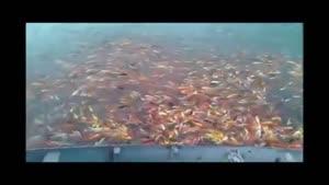 هزاران ماهی رنگی ...خییییلی خوشگله