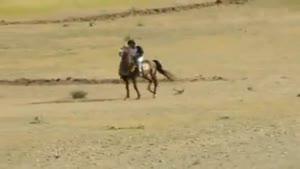 اسب عرب کرد