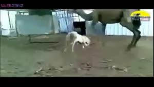 نبرد جانوران