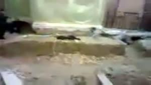تصاویری از قبر مطهر امام حسین ع