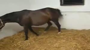 زایمان طبیعی اسب