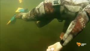 شکار تمساح