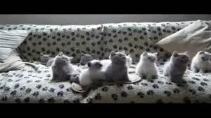 حرکات هماهنگ گربه ها