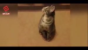 ویدیو باحال از حیوانات خانگی