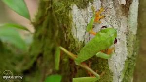 طبیعت شگفت انگیز کوستاریکا
