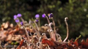 رقص گل ها