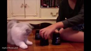 گربه های باهوش