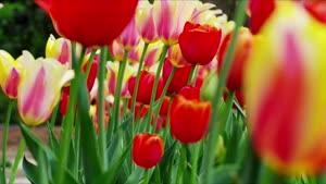 زیبایی های فصل بهار - کیفیت ۴k