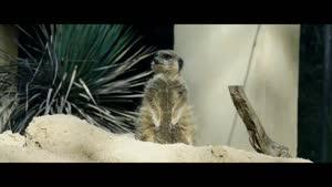 تصاویر زیبایی از حیات وحش و حیوانات - با کیفیت ۴k