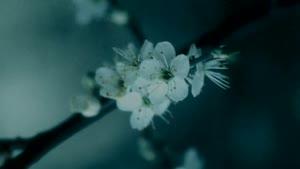 تصاویر زیبا وآرامش بخش از طبیعت