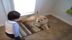 بی توجهی سگ به حرفای بچه