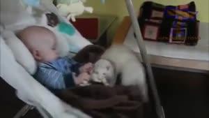 دوستی حیوانات