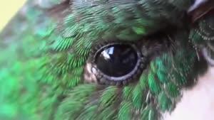 پرندگان زیبای برزیلی