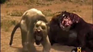 خرس صورت کوتاه و شیر ماقبل تاریخ