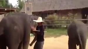 رقص فیل ها