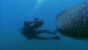 کوسه نهنگ