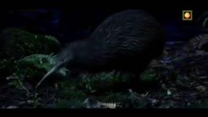 سیاره جهش یافته - نیوزلند