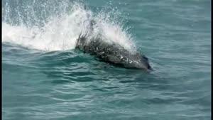 دلفین ها