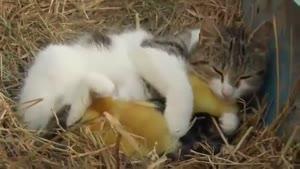 رابطه صمیمی حیوانات
