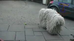 عجیب ترین حیوانات