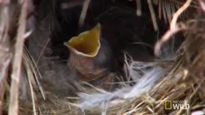 غذا دادن پرندگان