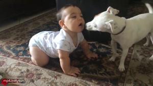 وقتی سگ ها به نوزادان سینه خیز رفتن یاد می دن