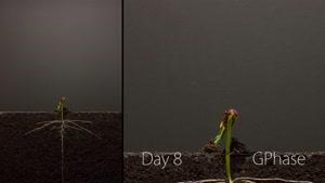 تایم لپس زیبا از رشد گیاه