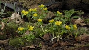 گل های بهاری با کیفیت ۴k
