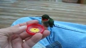 پرنده عجیب