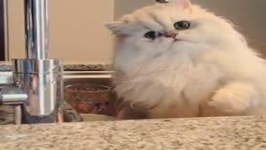 بازی گربه با شیر آب
