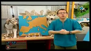 برنامه کاوش - گرگها و سگ ها
