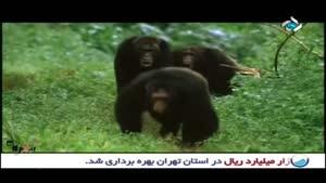 برنامه کاوش - میمون ها