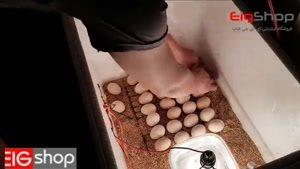 ویدیو جوجه کشی با دستگاه جوجه کشی دست ساز