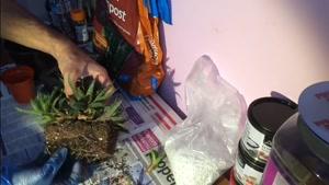 نگهداری ، تکثیر و تعویض خاک گلدان کاکتوس