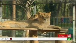 چگونگی نگهداری حیوانات وحشی در باغ وحش تهران