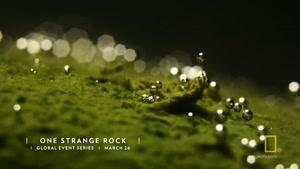 مستند جدید One Strange Rock