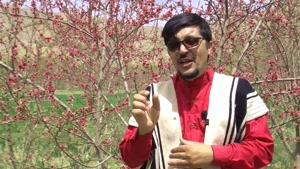 شعرعشق یعنی ضبط شده درشهرستان سامان